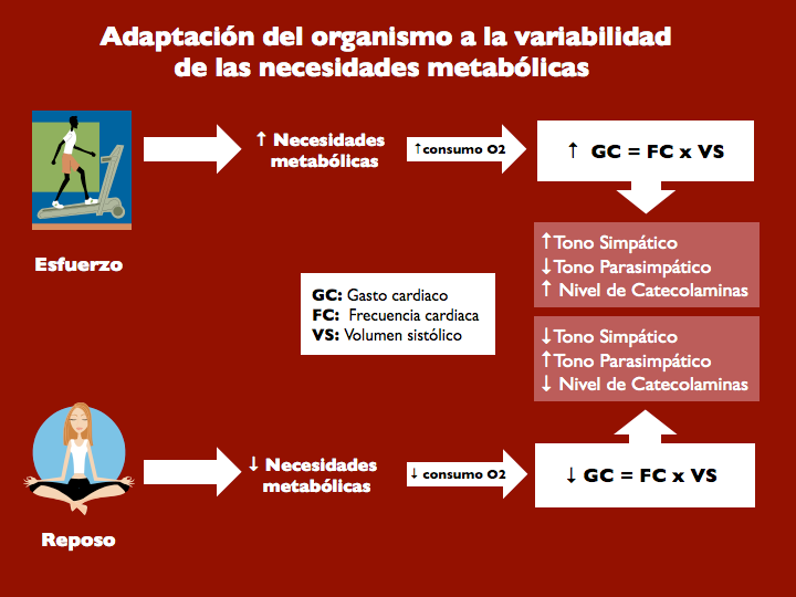 Figura 1. Adaptación del organismo a la variabilidad de las necesidades metabólicas